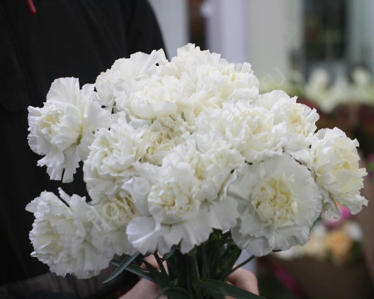 Картинки с цветами белых роз тогда, когда